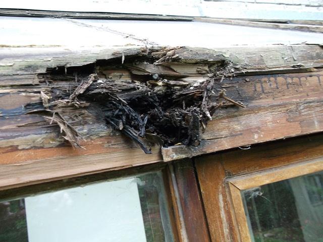 Rotted wood on solarium